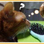 疑似猫草とリバース