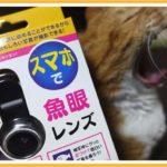 100均の魚眼レンズで猫を撮影