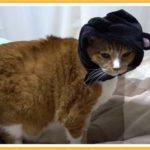 「黒猫が目の前を横切る」国によって異なる迷信