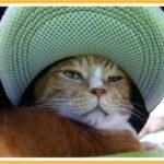 猫も似合うね、ツバ付き帽子