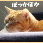 コタツ冬眠から目覚めて動き回りはじめた猫さん
