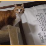 猫が出入りする部屋のドアに100均のカーテン設置でエコ生活
