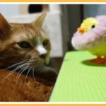 動くファーヒヨコなのに無関心な老猫ヒヨリさん