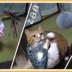 猫とおもちゃ遊び3日目