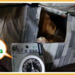 猫が引きこもっているコタツの中の湿度を計測