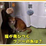 (我が家の)猫が好きな色のおもちゃを調べてみました