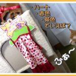 犬用のLサイズの服ですが我が家の猫にはSサイズでした