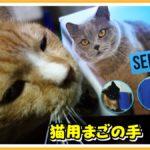猫が自分でかゆい所をブラッシングできるアイテム【既製品】