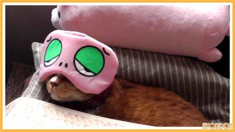 UQアイマスクの猫