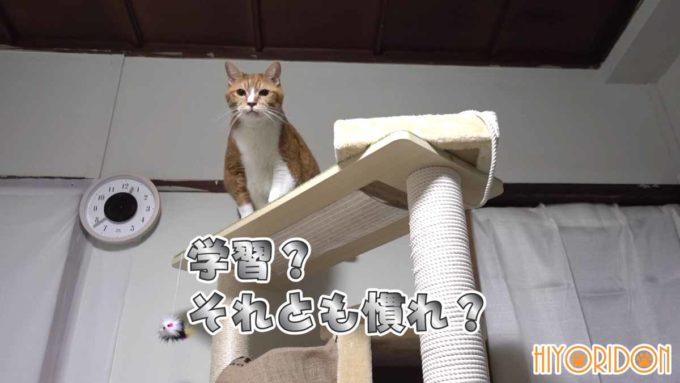 猫の学習能力