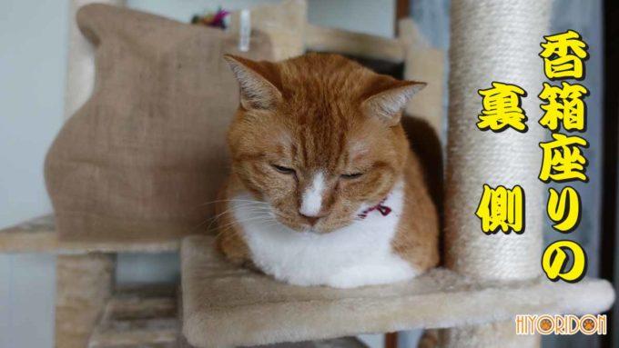 猫の香箱座りの裏側