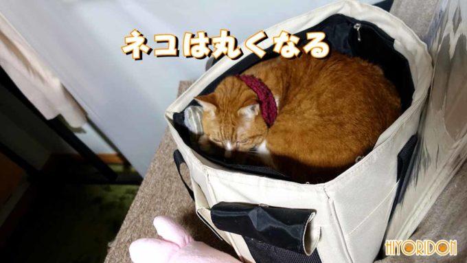 猫の記憶力