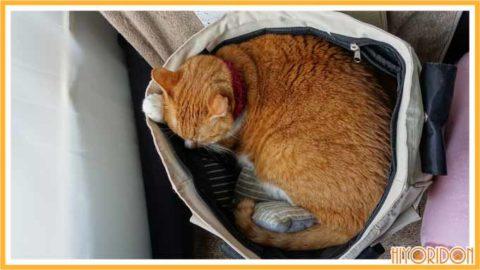 キャリーバックで寝る猫