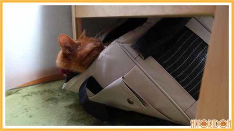 バランス感覚のよい猫