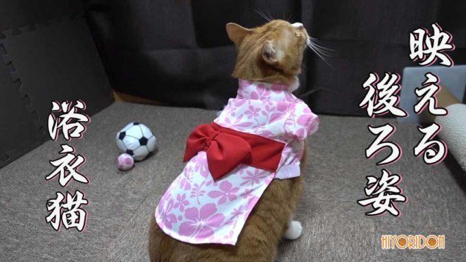 映える浴衣猫