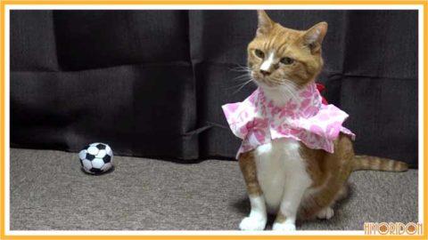 浴衣マントを着た猫