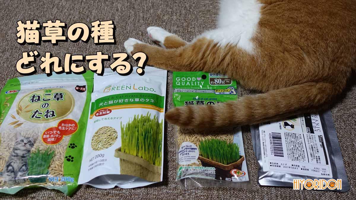 猫草の種の比較