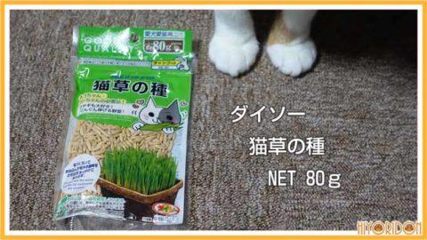 ダイソー猫草の種