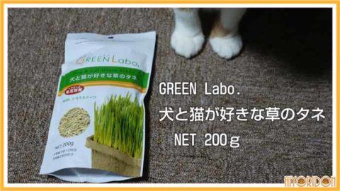greenlabo 猫草のタネ