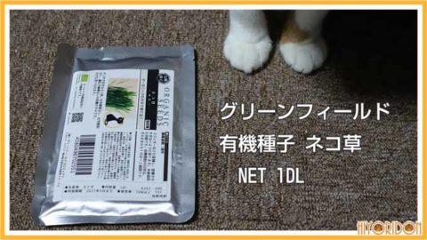 グリーンフィールド猫草