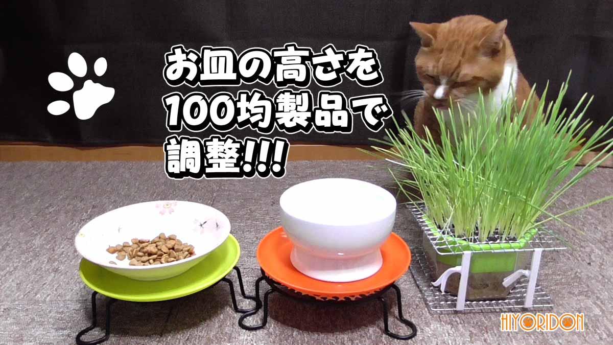 老猫が餌を飲み込みやすいように百均製品でお皿の高さを調整