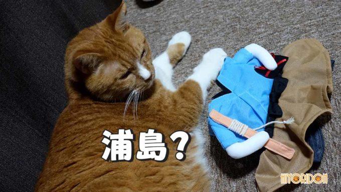 Sサイズの浦島太郎の服をひと手間加えてLサイズの猫が装着