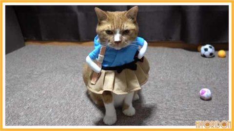 浦島太郎の服を着た猫