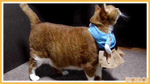 横から見た浦島太郎服を着た猫