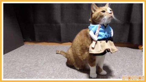 浦島太郎服を着た猫