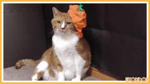 にんじんのかぶり物をした猫