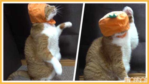 かぶりものをした猫