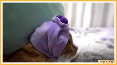 ブルーベリーケーキ猫