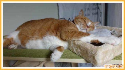 渡り板にねる猫