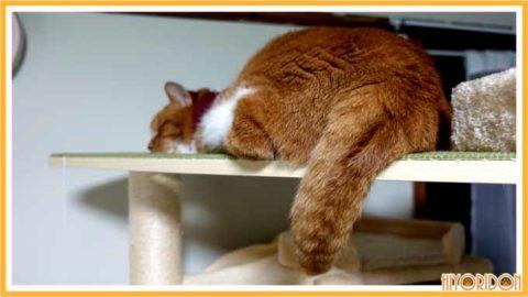 キャットタワー最上段で寝る猫