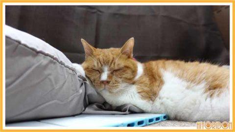アルミボードで寝る猫