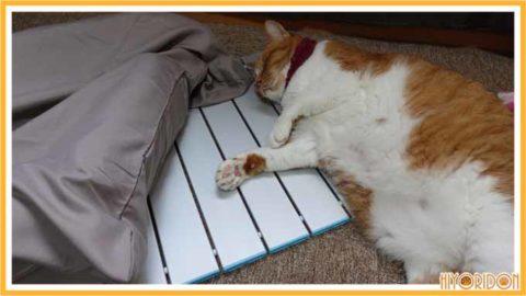 ひんやりと寝る猫