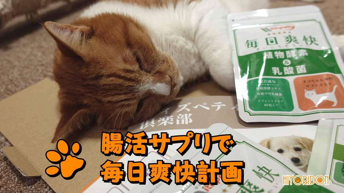 便秘気味な猫の為に腸活サプリで毎日爽快計画開始