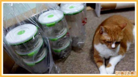 容器の梱包状況