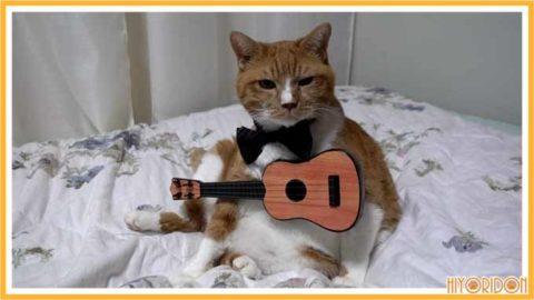 ギターを弾く猫1