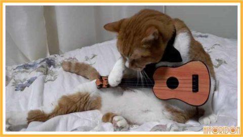 ギターを弾く猫2