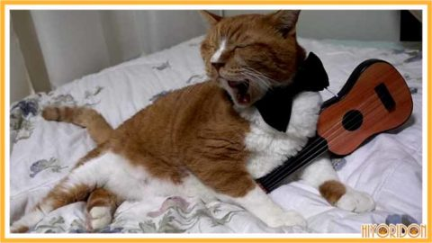 ギターを弾く猫4