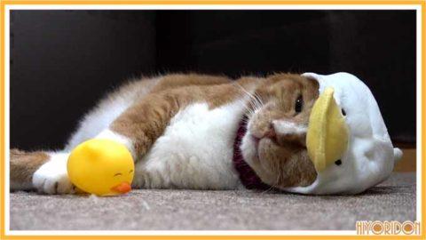 あひる帽の猫