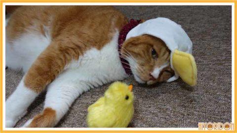 あひる帽をかぶった猫2