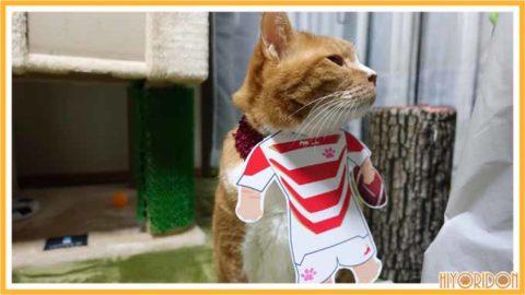 ラグビー服を着た猫