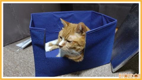 BOXくつろぐ猫