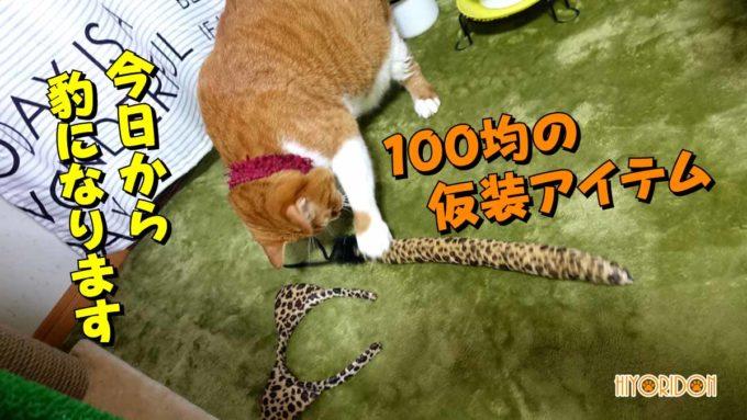豹のコスプレ猫