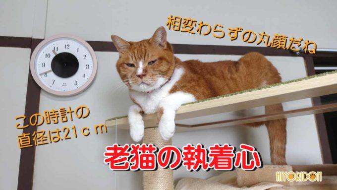 老猫の執着心