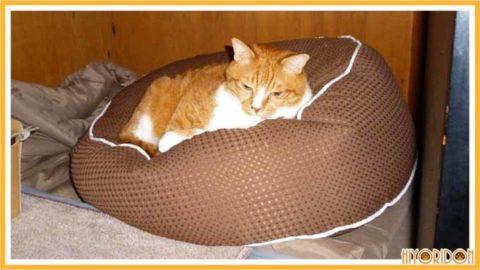ビーズクッションに寝る猫