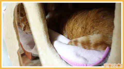 バスマットと猫