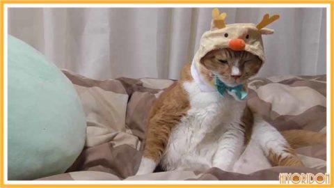 トナカイの猫